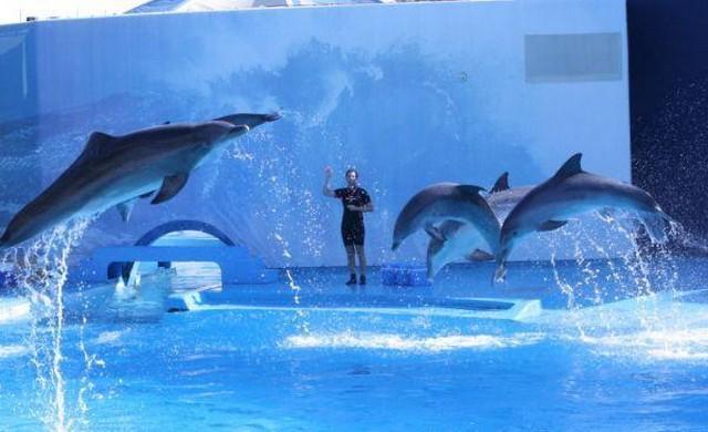 Pływanie z delfinami w Portugalii - Algarve