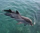 nurkowanie z delfinami w Ejlat, trening relaksacji